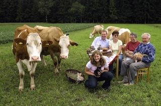 Picknick mit Kühen
